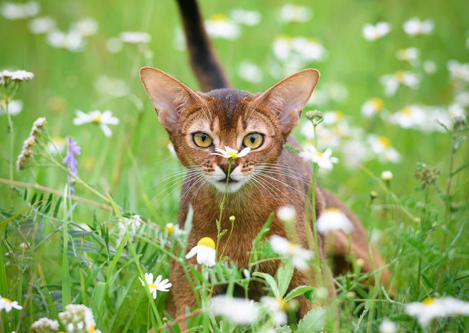 Абики в траве